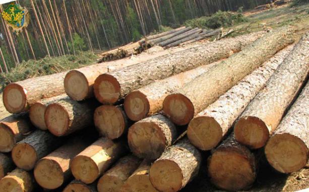 В області обстежили роботу лісопильних об`єктів
