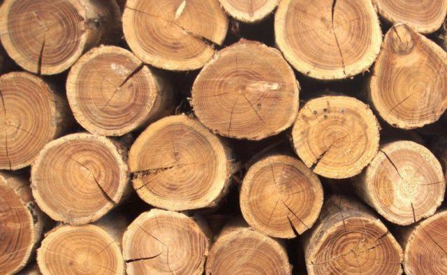 Україна перейшла на нові національні стандарти якості деревини