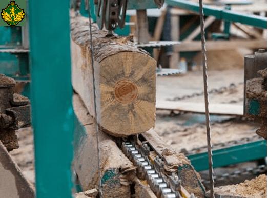 Read more about the article На Львівщині зростають обсяги переробки деревини