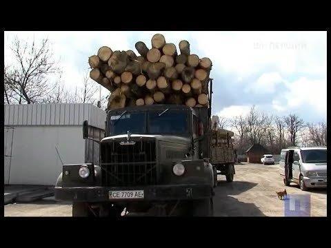 Перша шпальта. Контрабанда деревини