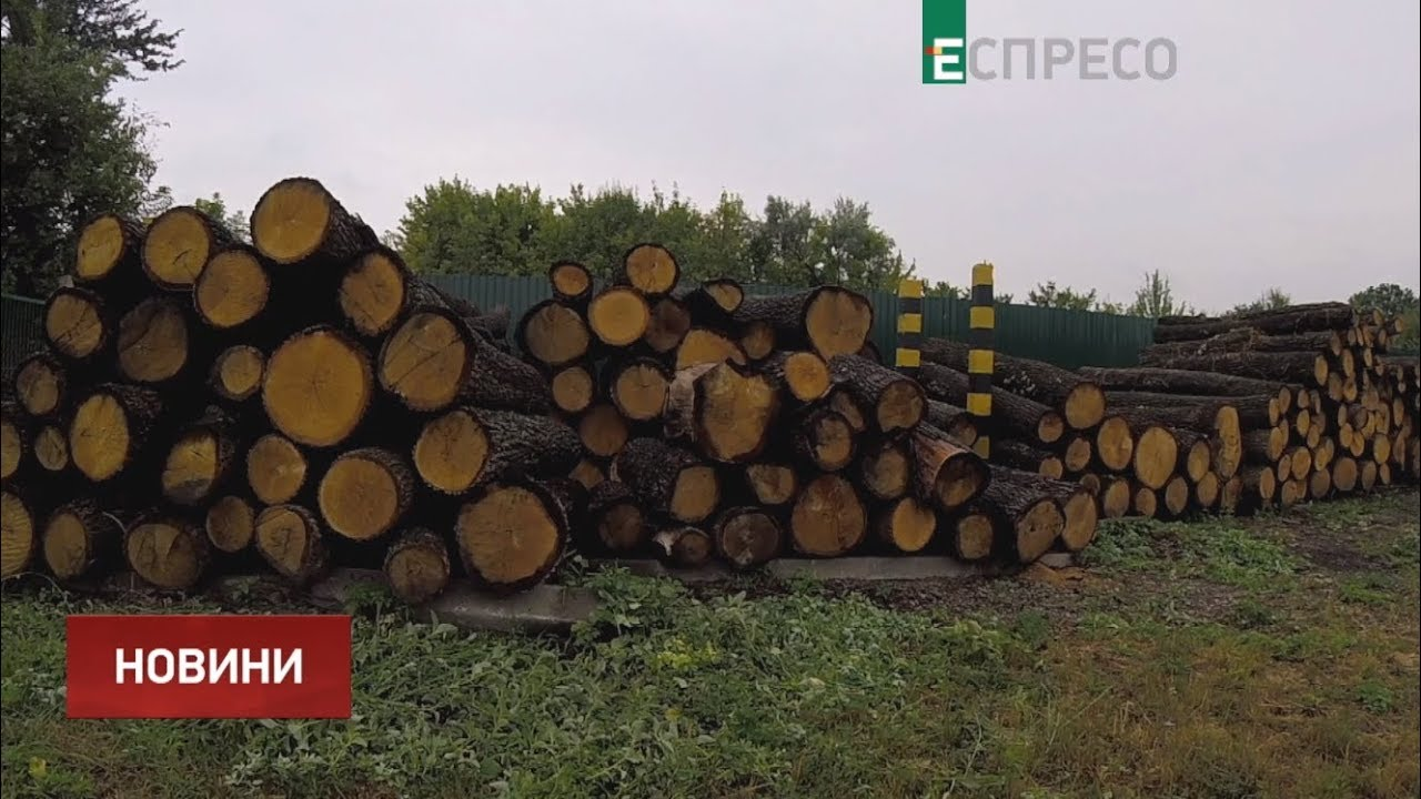 Предприятия Минобороны обязали ввести электронный учет древесины