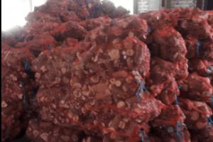 Возле Северодонецка обнаружен нелегальный цех по переработке древесины