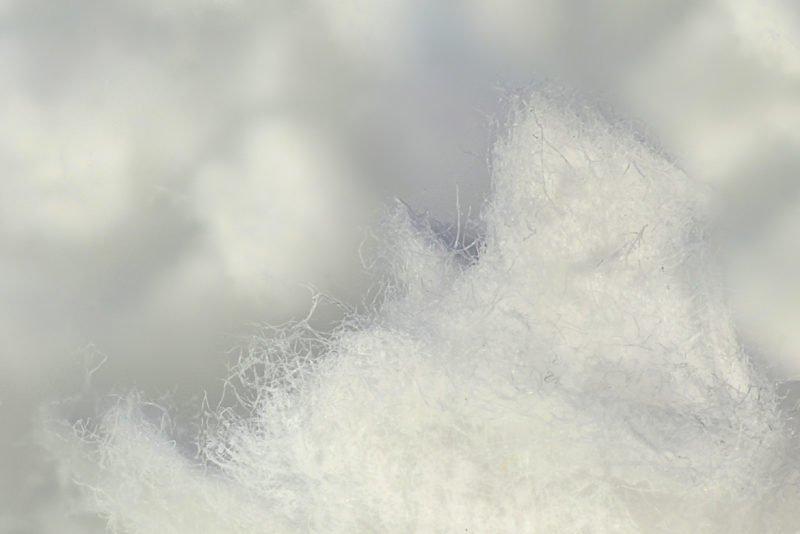 Древесина — это суперматериал, и самым свежим примером этого является целлюлоза