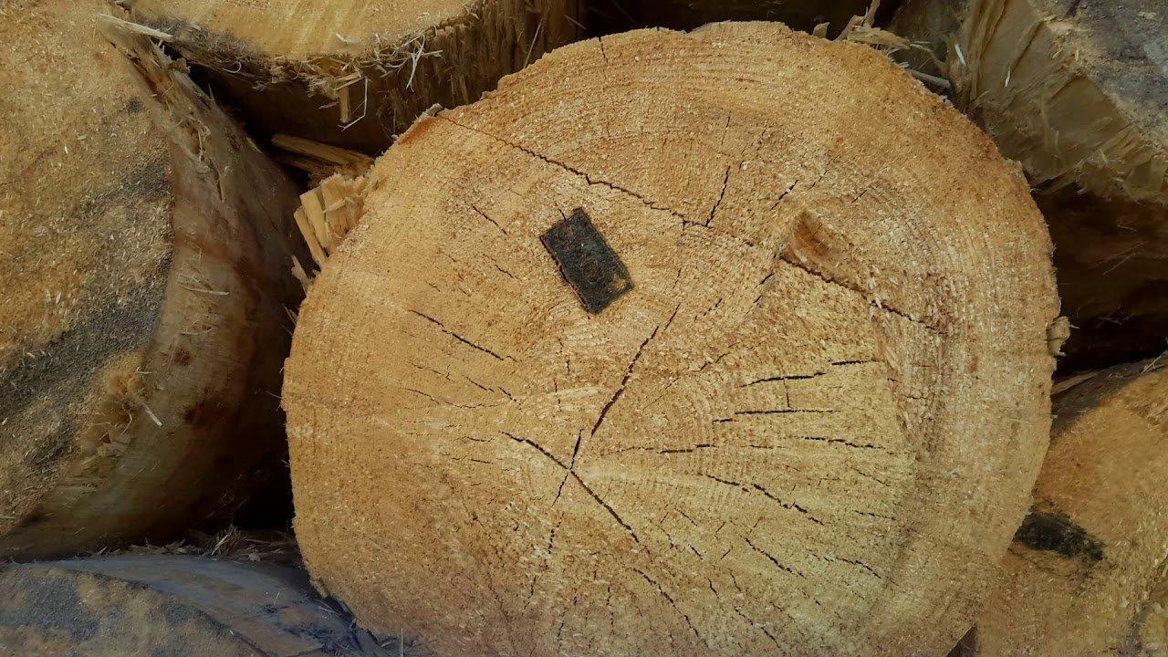 Швайгофер убивця українського лісу