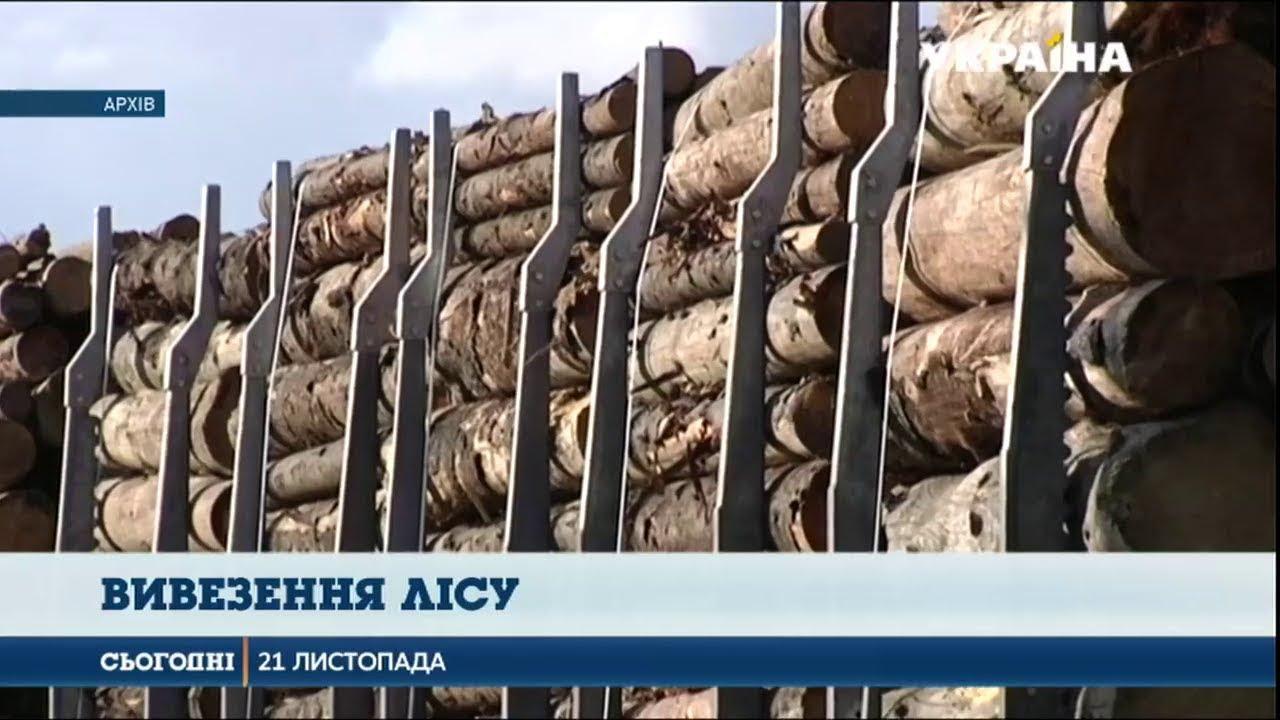 Сім вагонів особливо цінної деревини затримали слідчі Генпрокуратури