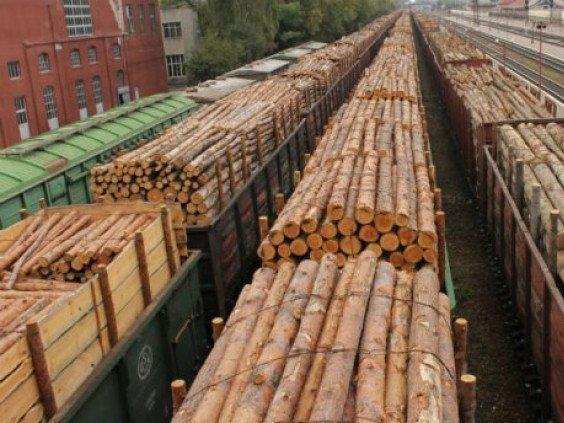 За місяць з Ківерцівського району вивезли 50 вагонів ділової деревини