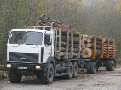 Волинські фіскали хочуть запровадити єдину інформаційну систему щодо обігу деревини