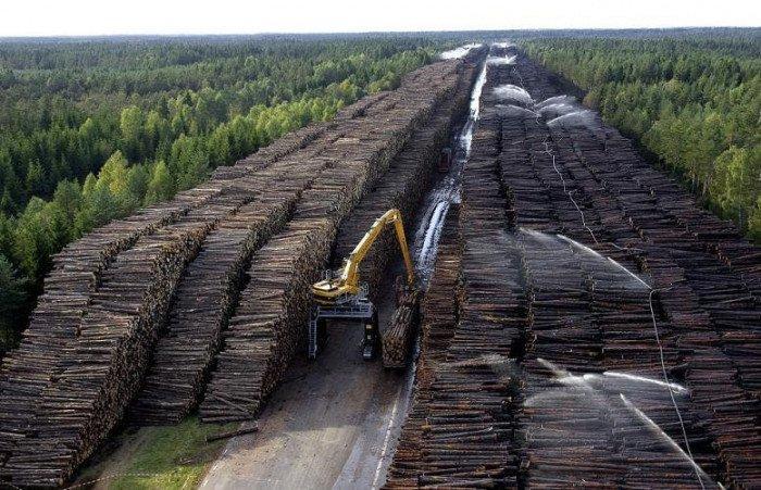 Почти весь лесной бизнес Сибири принадлежит китайцам