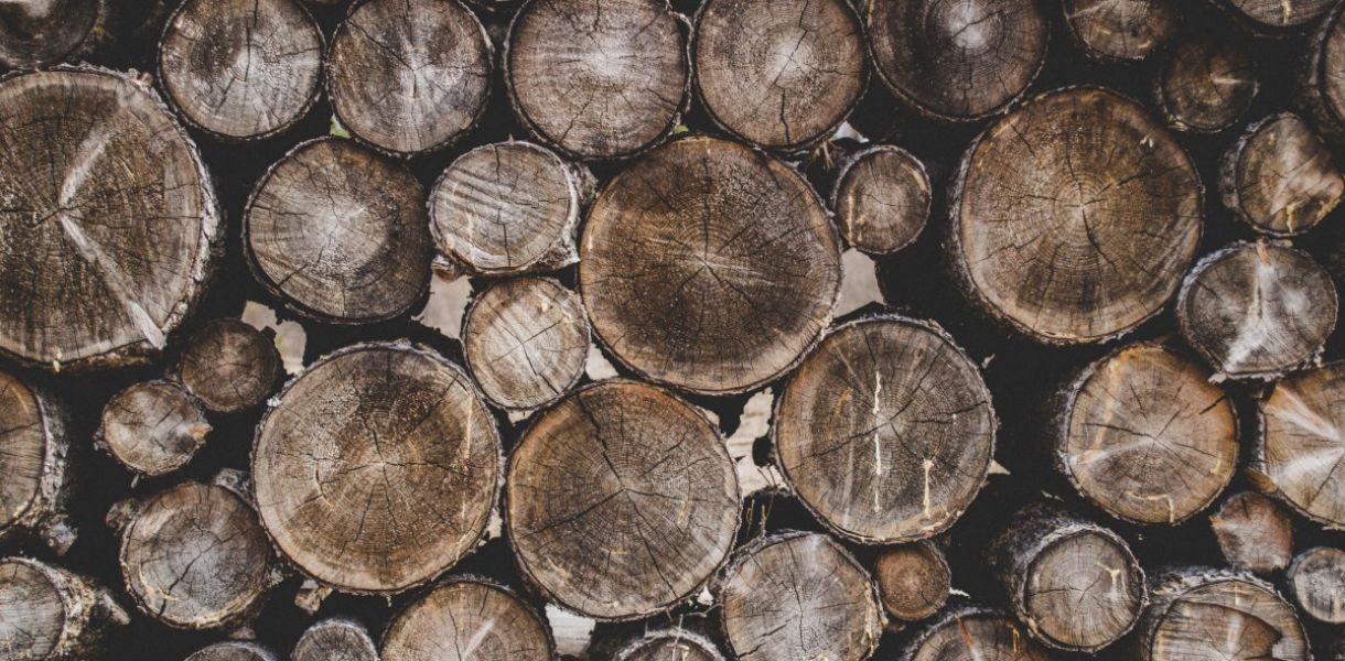 Украинцы вывезли в Румынию 406 тыс. тонн леса-кругляка под видом дров