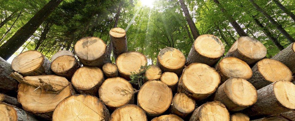 Мораторий раздора: какой эффект дал запрет на экспрот леса