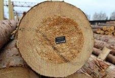 Особливості формування вільних цін на лісопродукцію