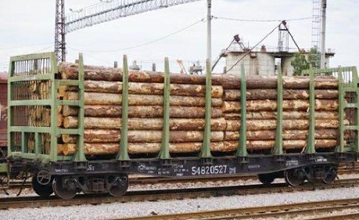Кому вигідні скандали з продажем українського лісу? (ВІДЕО)