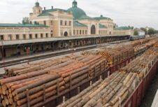 Україна та ЄС вийшли на переговори: скасування заборони на вивезення лісу