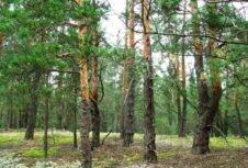 На Верховинщині обговорили регулювання податку на лісові землі