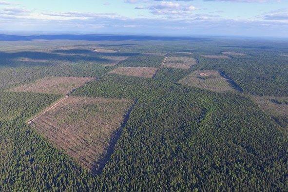 Read more about the article Индия одолжит России 1 млрд долларов и начнет вывозить дальневосточный лес