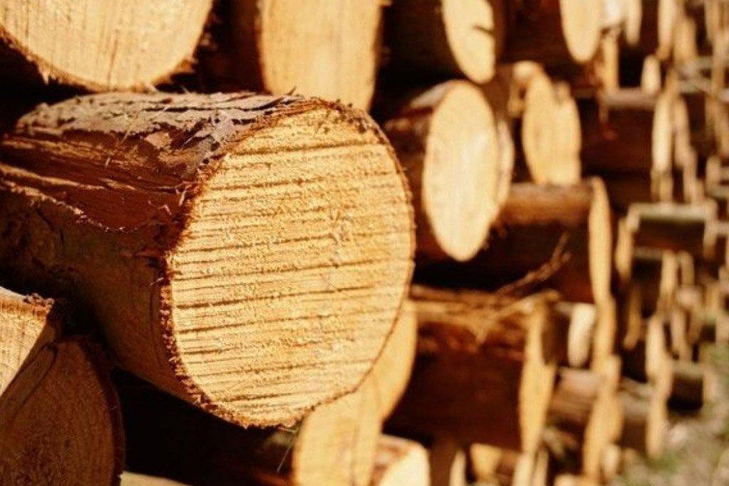 Экспорт российских лесоматериалов за первые семь месяцев 2019 года