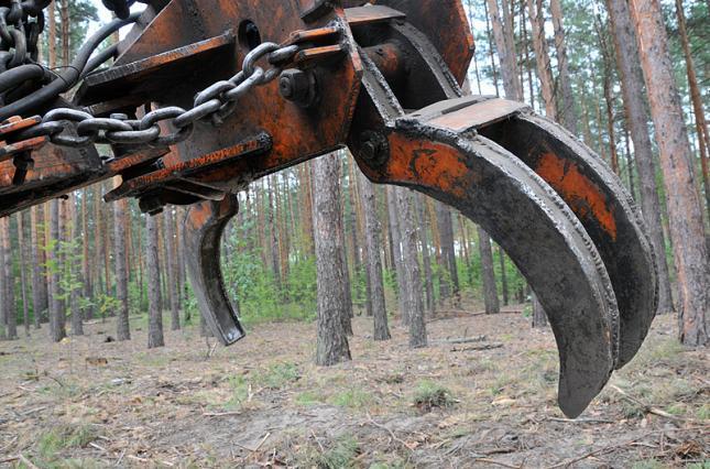 Владимир Бондарь: «Сценарий развития лесного хозяйства Украины должно определять государство»