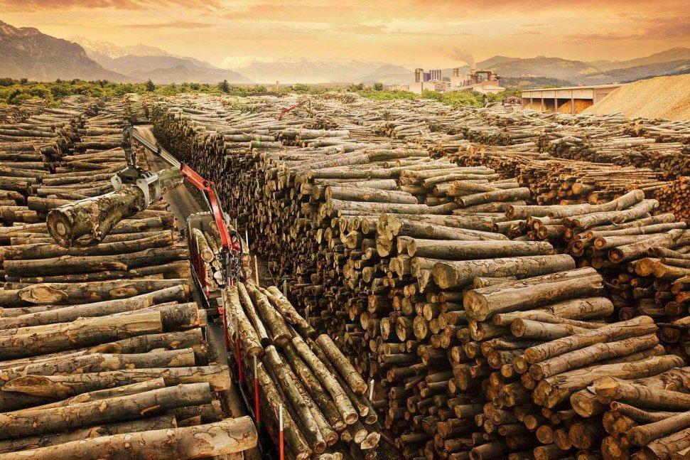 Китай: понижение импортных цен на бревна хвойных пород