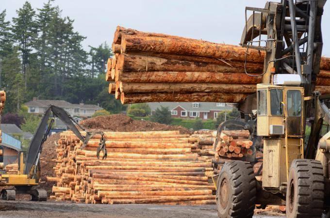 Новозеландские лесозаготовители испытывают проблемы после падения цен в Китае