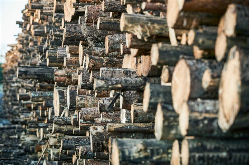 Södra корректирует цены на древесину в соответствии с условиями на рынке