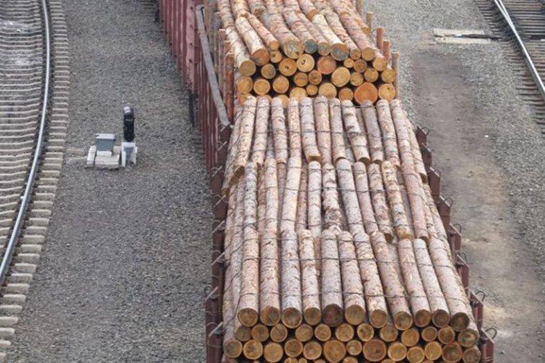 В китайско-российском деревообрабатывающем центре города Суйфэньхэ заработало первое предприятие