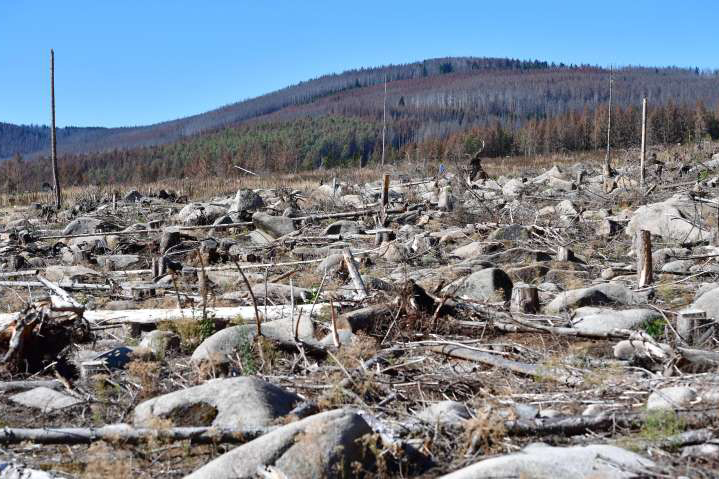 Меркель обещает полмиллиарда евро на восстановление немецких лесов