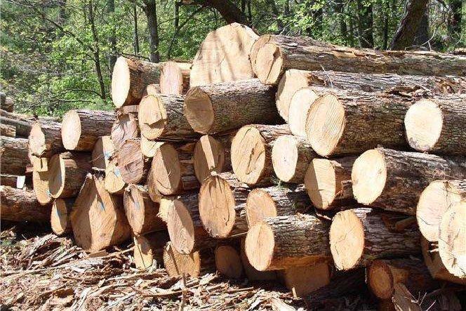 В Беларуси планируется изменить порядок реализации древесины
