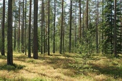 Правительство Беларуси утвердило объемы реализации древесины вне биржи в 2020 году
