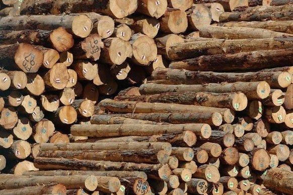 Чиновники лесной отрасли Новой Зеландии сделали мрачный прогноз о торговле круглым лесом