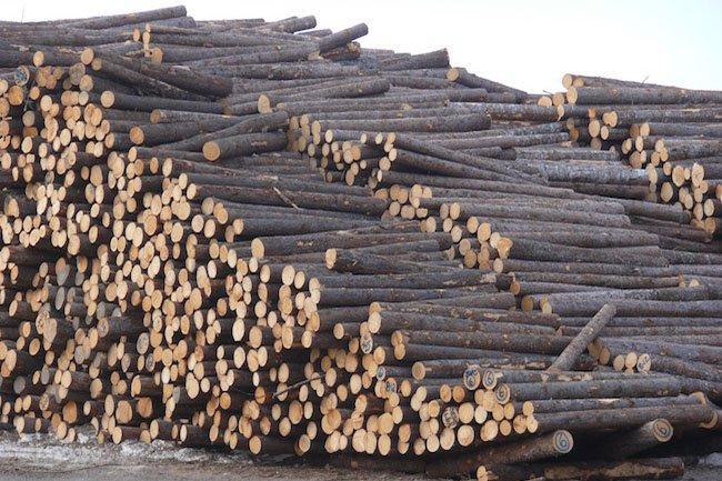 Снижение стоимости древесного сырья для производителей пиломатериалов в Европе и Северной Америке