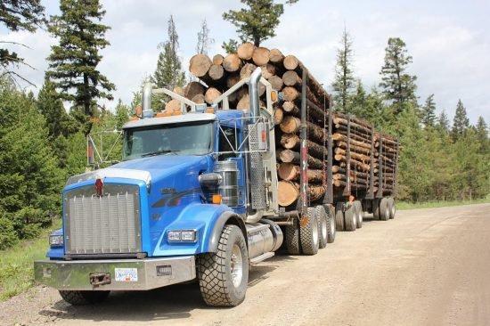 Коалиция лесозаготовителей Британской Колумбии требует действий по устранению лесного кризиса
