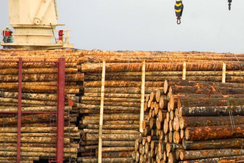 Новая Зеландия – лидер по экспорту круглого леса