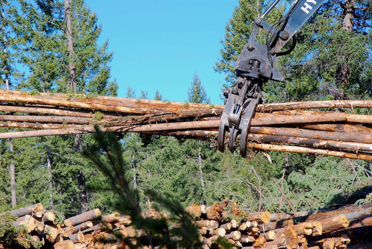 Японские лесные гиганты расширяют свою деятельность в Новой Зеландии по мере роста спроса на древесину в Азии
