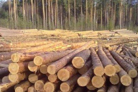 Эстония: резкое падение цен на пиловочник