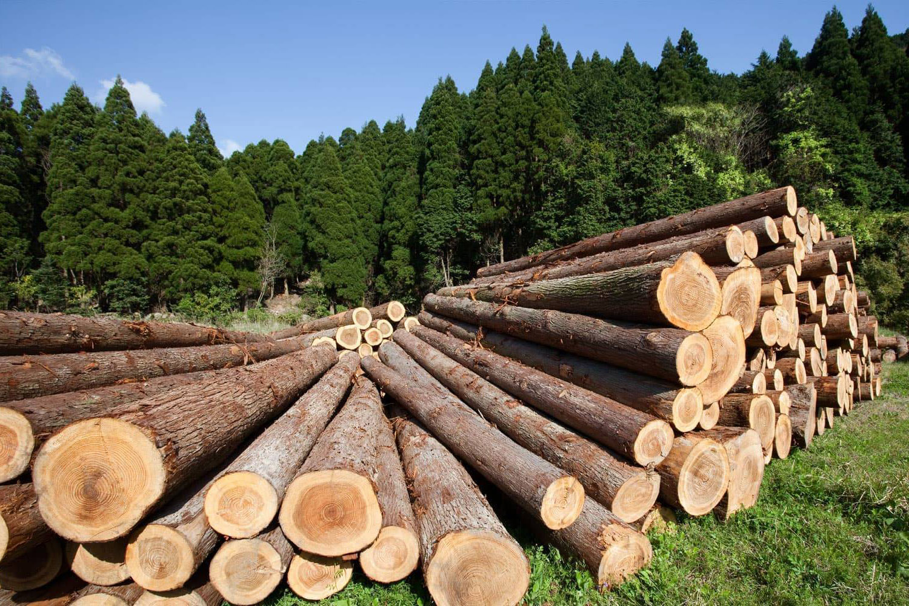 Правительство не поддержало идею группы депутатов об ограничении экспорта древесины до 2035 г.