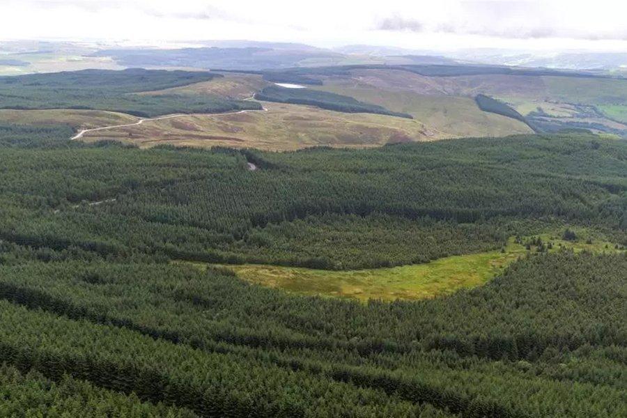 Многофункциональный лес с энергетическим потенциалом для продажи на 5 342 акрах