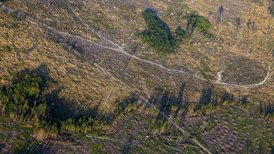 Короедное усыхание удешевило чешскую древесину. Германия и Австрия протестуют против её импорта.