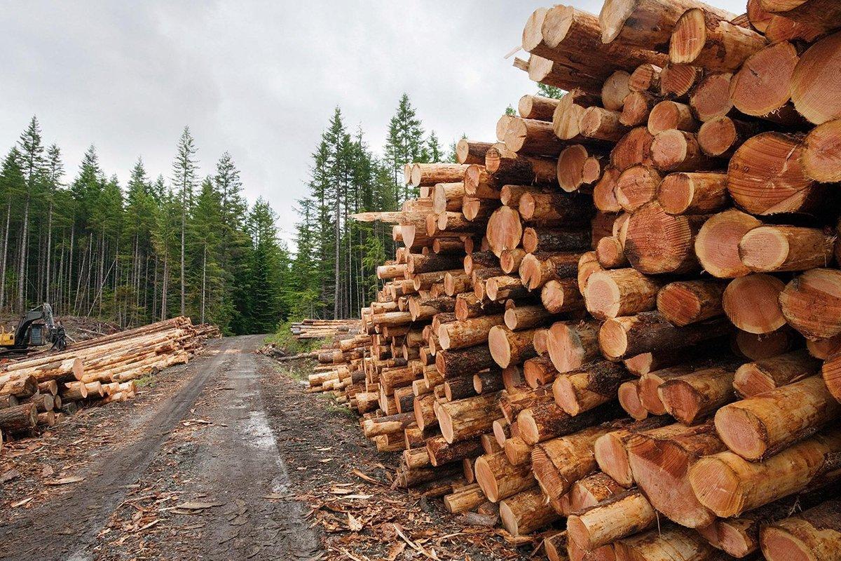 Беларусь планирует перерабатывать всю свою древесину сама
