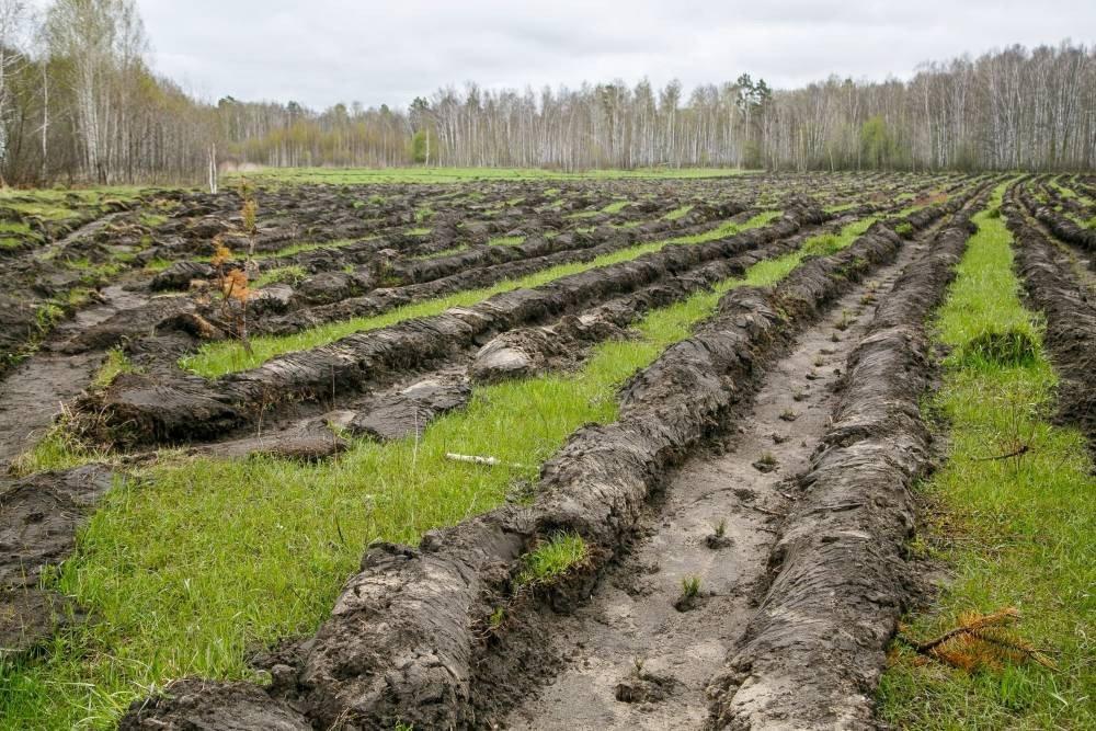 Частное лесное хозяйство решит многие проблемы лесного сектора