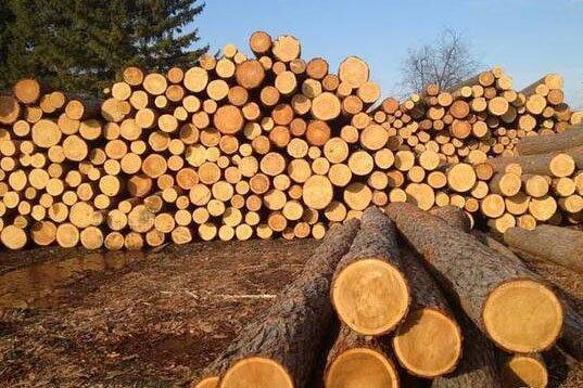 Почти 1 млн. м3 круглых лесоматериалов хвойных пород уже экспортировано в Китай