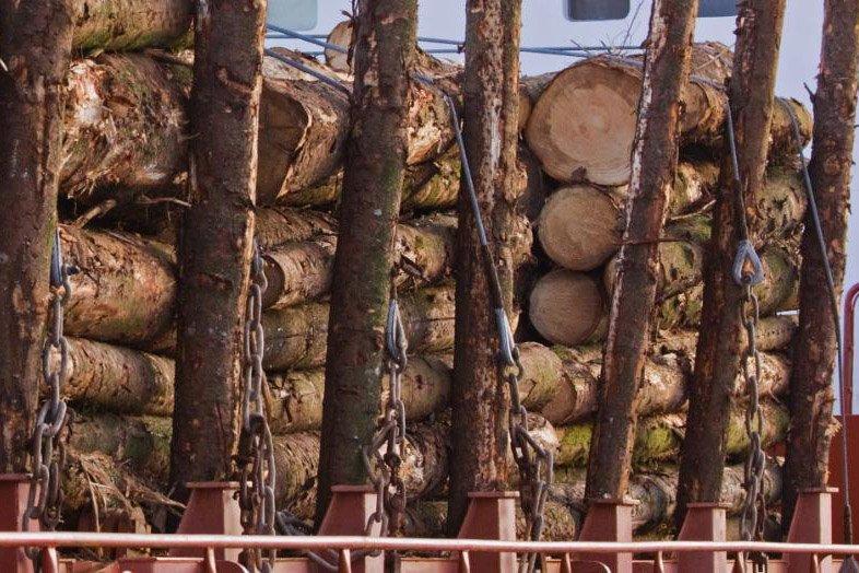 Экспорт российского круглого леса хвойных пород сократился на 14%