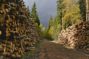 Лесной сектор Эстонии готовится к спаду по мере замедления мировой экономики и развития бедствий в Центральной Европе