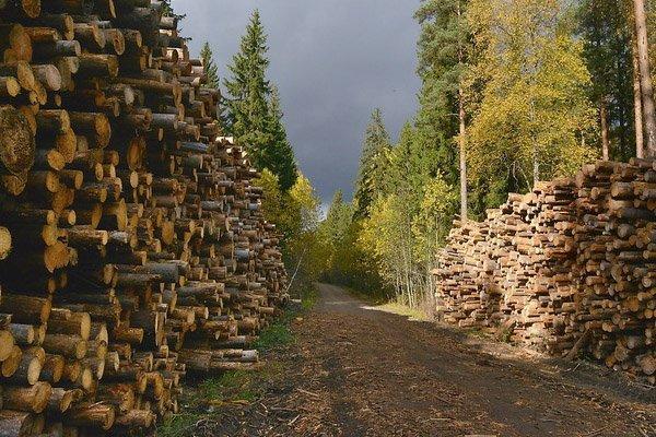 В сентябре 2019 г. Финляндия сократила заготовку древесины на 3%