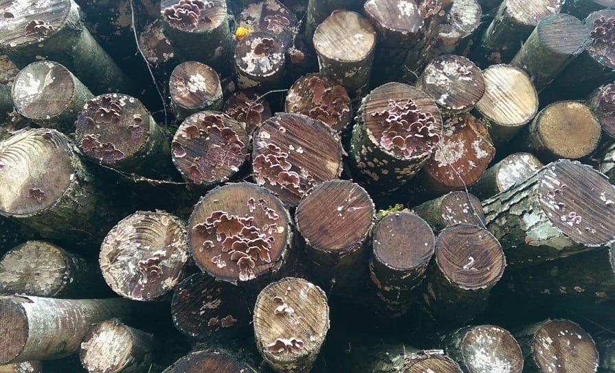 Увеличение импорта топливной древесины из Беларуси пугает литовских производителей биотоплива