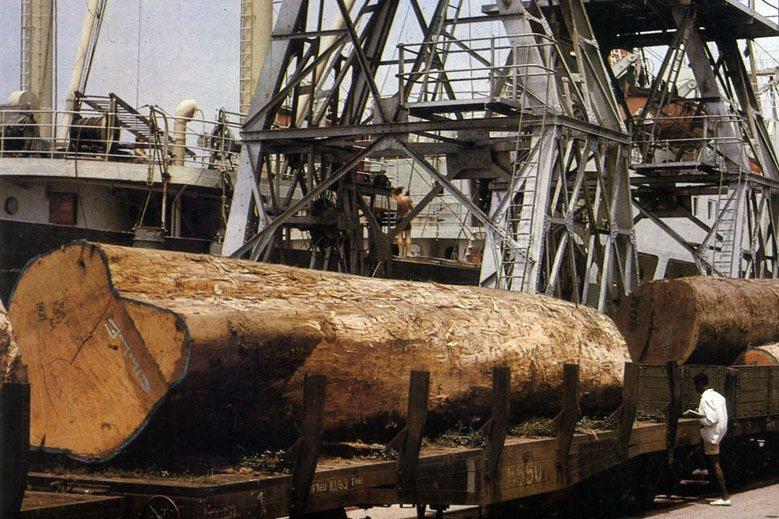 Импорт тропической древесины в Евросоюз за три квартала 2019 года