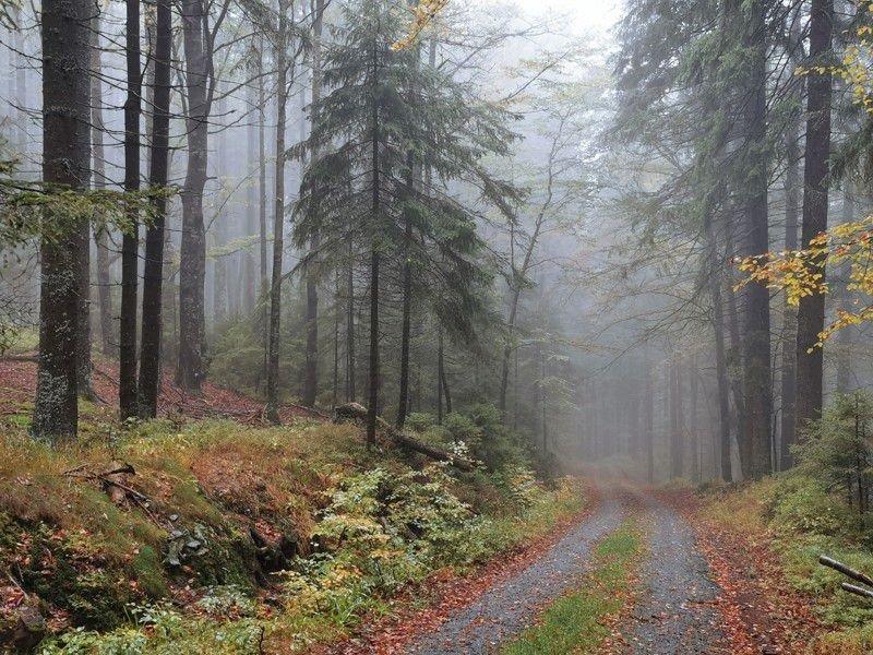 Тридцать лет после бархатной революции в Чехии: воспоминания и размышления лесоводов