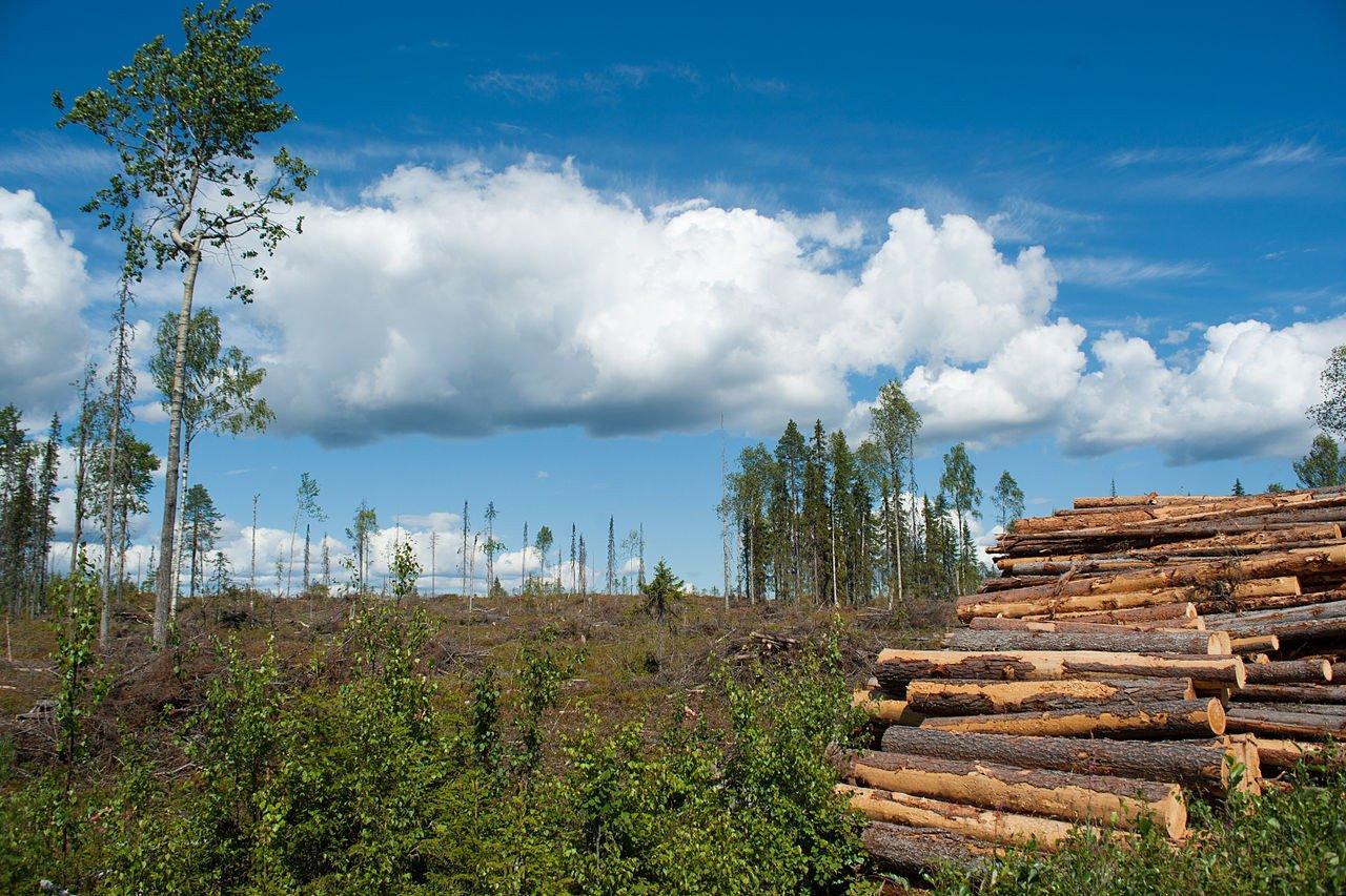 В Финляндии подсчитали объем экспорта и импорта за 2018 год