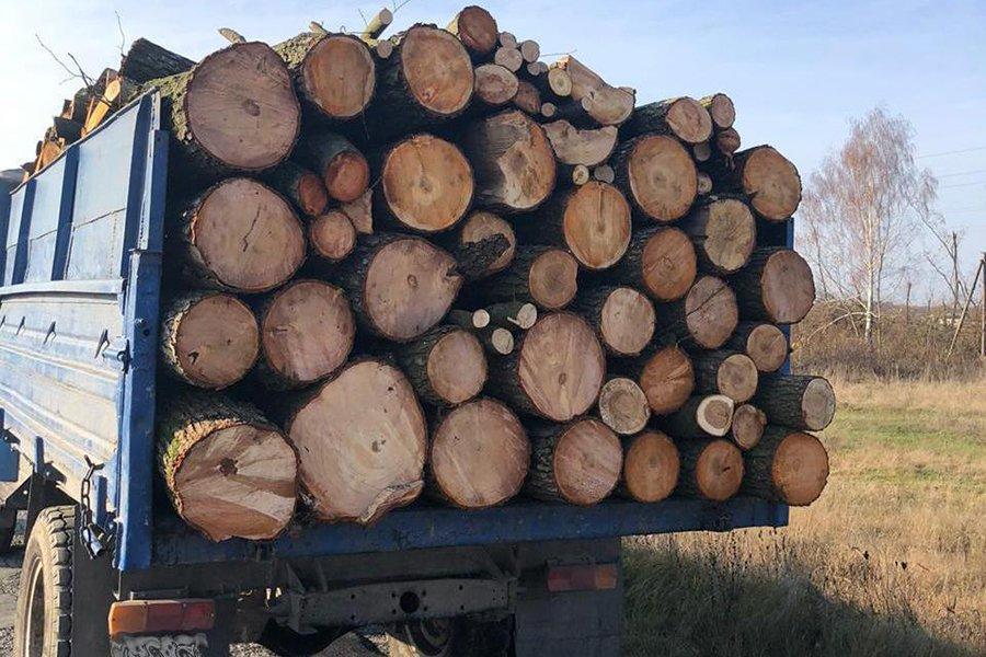 На Житомирщине разоблачили масштабную схему хищения леса для экспорта