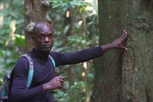 Габону удаётся держать в равновесии развивающуюся  лесную промышленность и проблемы окружающей среды