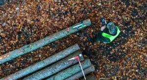Новые правила продажи древесины в государственных лесах Польши